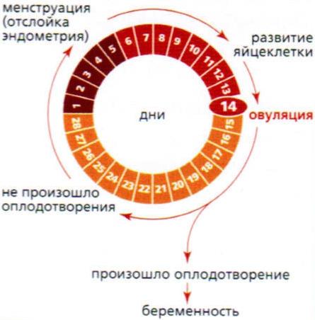 Как сделать короче месячные - Mmrr.ru